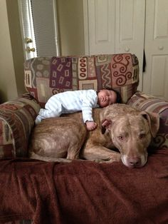 21 Reasons Why Pit Bulls Are The Best Cuddlers In The World