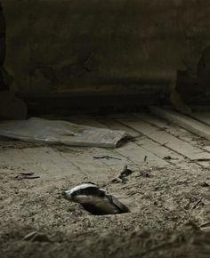 une-maison-abandonnee-dans-les-bois-envahie-par-des-dizaines-d-animaux-en-tous-genres20
