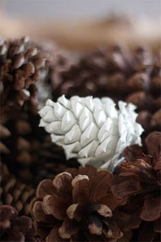 Paint Dipped Pinecones: Just because Christmas is over and gone, it doesn't follow that you have to give up all of your winter decorations. Bring a little winter woodlands into your house during the post holiday months with these pretty dipped pinecones. If the cones around you aren't fully opened (open cones look best) dry them out in the oven on the lowest setting until they open completely.
