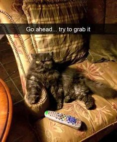 24 Funny Animal Pictures Of The Day
