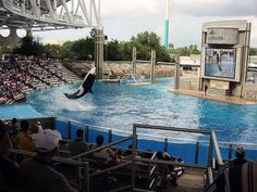 Experience SeaWorld Orlando, Florida - Bucket List Dream from TripBucket