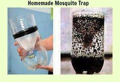 Homemade Mosquito Trap, kill mosquitoes ecologically - Recycle Lovers