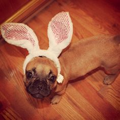 Easter bunnies have never been cuter