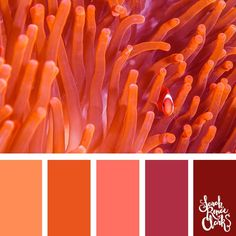 Take a dive under the sea with these beautiful color combinations inspired by ocean life and Living Coral - PANTONE's 2019 Color of the Year. Coral Colour Palette, Orange Color Palettes, Color Schemes Colour Palettes, Color Combos, Color Plan, Image Clipart, Ocean Colors, Beautiful Color Combinations, Color Balance