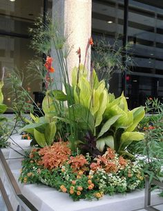 ADAM WOODRUFF + ASSOCIATES - Pierre Laclede Center. more containers with papyrus, canna, coleus, lantana