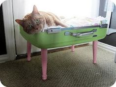 How To Make: Pet Bed Out of a Suitcase | The Purple Pea