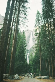 Yosemite Park. California. USA.
