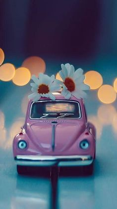 Cute💙 - picture for you Wallpaper Nature Flowers, Beautiful Nature Wallpaper, Rose Wallpaper, Miniature Photography, Cute Photography, Cool Pictures For Wallpaper, Cute Couple Art, Miniature Cars, Arte Pop
