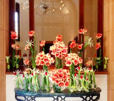 @Four Seasons Hotel Istanbul at Sultanahmet's lobby, filled with delightful peachy-pink Amarllis.