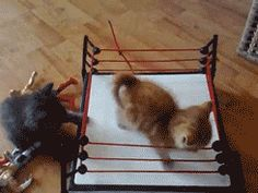 Cat fight Gifs - www.gifsec.com