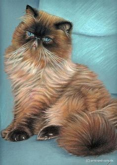 Cat Drawing - Persian Cat by Nicole Zeug