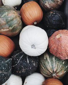 pumpkins via little