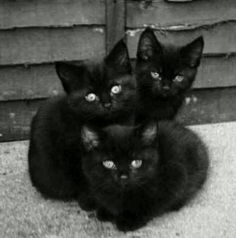 3 extremely cute black kittens. Aren't we lucky!!