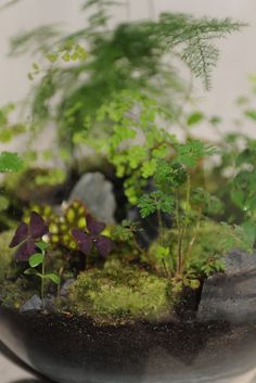 from grow little, terrarium atelier in paris