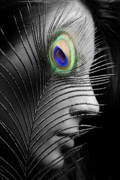 """""""A peacock's eye-kisses so amatureish they resembled an early form of printing."""""""