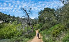 Sweetwater River Loop (Cuyamaca Rancho State Park) - Hiking San Diego County