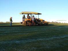 Harvesting lawn turf at Daleys Turf on a frosty morning at Beerwah, Sunshine Coast, Qld, Australia