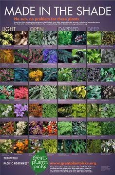 Shade plants for the pacific northwest. #seattle #gardening #greatplantpicks