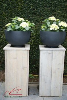 Bring Contrast Into Your Garden Design - Gardening Outdoor Plants, Outdoor Gardens, Jardin Decor, Plantation, Garden Planters, Tall Planters, Garden Styles, Dream Garden, Garden Inspiration
