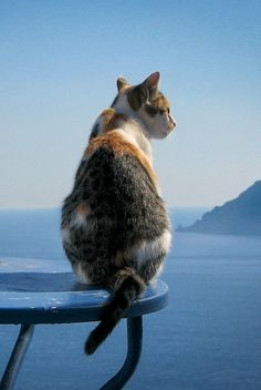 The cats of Santorini Island (Oia), Greece
