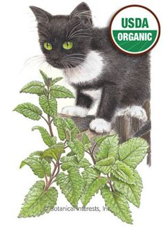 Catnip Organic Heirloom Seed -Catnip is a multi-purpose plant. The tea is very pleasant with a lemon-mint flavor and fragrance. Fresh catnip and catnip toys will provide your cats with hours of fun. botanicalinterests.com