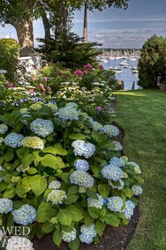 50 Most Beautiful Hydrangeas Landscaping Ideas To Inspire You 020 Yes, I want to live right here! 50 Most Beautiful Hydrangeas Landscaping Ideas To Inspire You 020 Beautiful Landscapes, Beautiful Gardens, Beautiful Flowers, Beautiful Life, Hydrangea Landscaping, Garden Landscaping, Landscaping Ideas, Jolie Photo, Henri Matisse