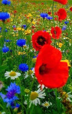 Beautiful Flowers Garden, Amazing Flowers, Pretty Flowers, Beautiful Gardens, Wild Flower Meadow, Wild Flowers, Deco Floral, Geraniums, Flower Pots