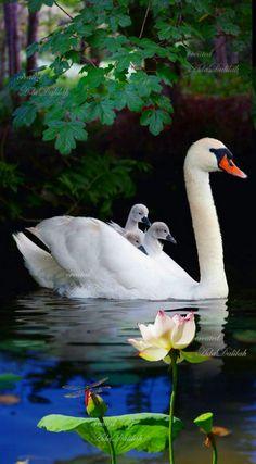 Little Birds, Love Birds, Beautiful Birds, Animals Beautiful, Bird Pictures, Nature Pictures, Animal Pictures, Animals And Pets, Cute Animals