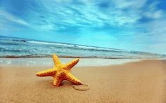 Starfish On The Beach Wallpaper Hd Desktop Wallpapers Strand Wallpaper, Beach Wallpaper, Beautiful Wallpaper, Hd Wallpaper, Summer Wallpaper, Wallpaper Patterns, Beautiful Images, Beautiful People, Beach Trip