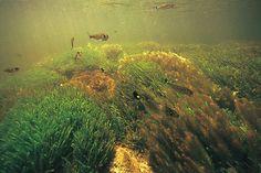 AMAZON Underwater Photographs | AmanoTakashi.net