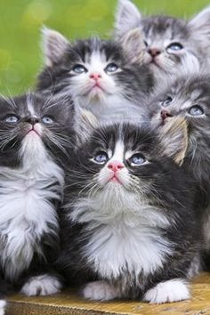 beautiful kitty's