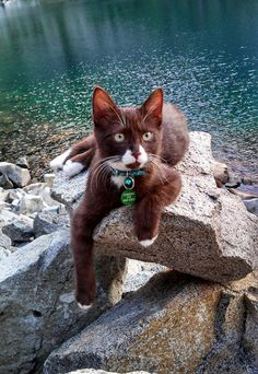 Brownie is a nice Tom.Wants a mate. Loves to fish