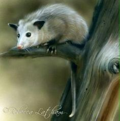 Painting of an opossum in a tree. This painting looks real.
