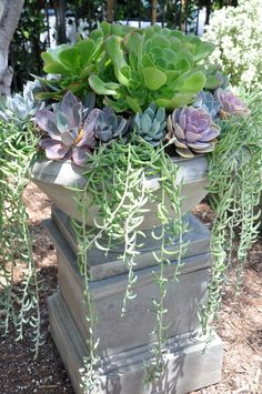 Beautiful succulent filled garden bowl on pedestal. Outdoor space designed by Brooke & Steve Giannetti