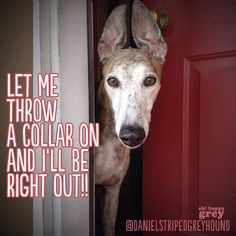 let me throw a collar on and i'll be right out. #greyhound hip hop instrumentals updated daily => http://www.beatzbylekz.ca