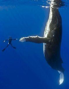 la ballena, el buzo, se dan la mano, nadan, se hacen amigos