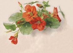 Vict-Vign_flowers