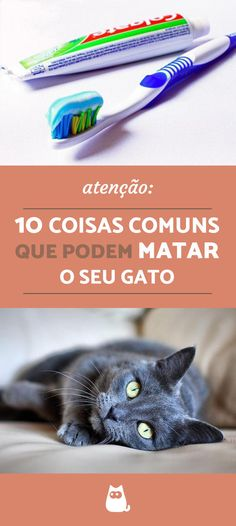 ATENÇÃO: Esses 1'' itens domésticos bem comuns podem MATAR o seu pet! Confira a lista de 10 coisas comuns que podem matar o sue gato e proteja o seu felino de todos eles.  #pets #gatos #cuidados #animais #mundoanimal #peritoanimal