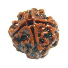 3gm Natural Religious 4mukhi Faced Rudraksha Shiva Energized Seed Loose Bead