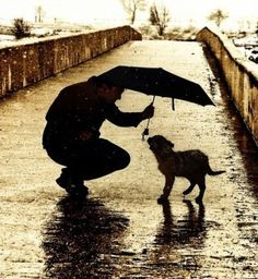 Man holding umbrella over doggie in the rain