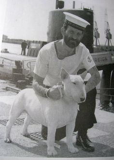 Bull terrier Ch. Faithful Royal Sovereign with sailor.