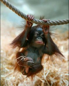 Zipline Baby