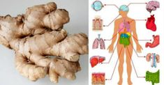 "In the traditional Ayurvedic medicine, ginger has been referred to as a ""natural medicine chest"", due to its numerous health benefits. In India, it is used on a daily basis, as the ginger-infused C… What Is Ginger, How To Eat Ginger, Health Remedies, Home Remedies, Sleep Remedies, Herbal Remedies, Varicose Vein Remedy, Varicose Veins, Health Benefits Of Ginger"