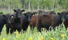 Oscar Ruiz y su equipo desarrollaron una nueva variedad de leguminosa para el pastoreo en el centro de la provincia de Buenos Aires.