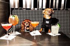 WELCOME TO THE PARK HYATT NYC WHERE DOGS ARE PEOPLE TOO | www.mrssizzle.com