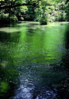 green green.. Oirase, Aomori/ 青森 奥入瀬