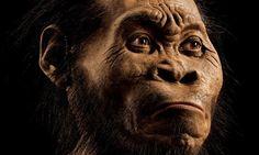 Por fin, científicos habrían descubierto la verdadera edad del intrigante Homo Naledi | N+1: artículos científicos, noticias de ciencia, cosmos, gadgets, tecnología