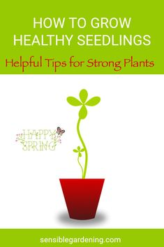 Learn how to grow strong, healthy seedlings for transplanting into your garden. Helpful tips for growing success.