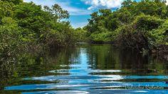 Amazonia - królestwo akwarystów słodkowodnych charakteryzujące się bardzo zróżnicowanym wyglądem biotopów oraz mnogością ryb i roślin akwariowych