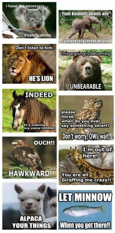 I have the necessary koalafications. Your koalafications are completely irrelephant. Don't listen to him. He's lion. This arguing is becoming unbearable. Indeed, it's making my voice horse. Please horse. When do you ever say something smart? Don't worry, owl wait. Ouch! Hawkward! I'm out of here! You are all giraffing me crazy! Alpaca your things. Let minnow when you get there!